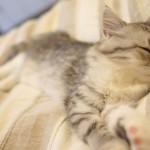 気持ちよくたくさん寝るために!休日も早起きのすすめ