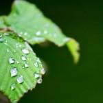 育児中のストレス解消は注目の『涙活』を活用しよう!~いい涙と悪い涙とは?